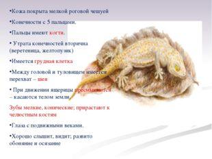Кожа покрыта мелкой роговой чешуей Конечности с 5 пальцами. Пальцы имеют когт