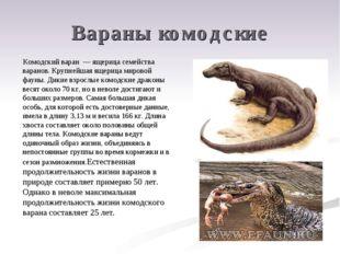 Вараны комодские Комодский варан — ящерица семейства варанов. Крупнейшая ящер