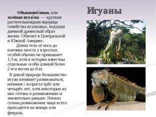 Игуаны Обыкнове́нная, или зелёная игуа́на — крупная растительноядная ящери