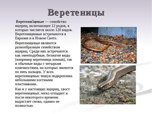 Веретеницы Веретени́цевые — семейство ящериц, включающее 12 родов, в которых...
