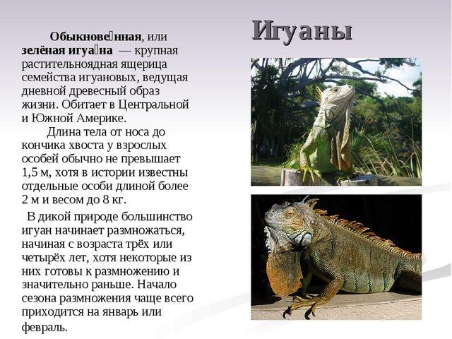 Игуаны Обыкнове́нная, или зелёная игуа́на — крупная растительноядная ящери...