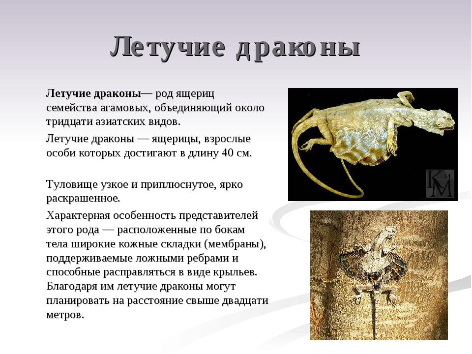 Летучие драконы Летучие драконы— род ящериц семейства агамовых, объединяющий...