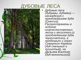 ДУБОВЫЕ ЛЕСА Дубовые леса (дубравы, дубняки) — насаждения с преобладанием дуб