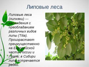 Липовые леса Липовые леса (липняки) — насаждения с преобладанием различных ви