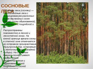 СОСНОВЫЕ ЛЕСА Сосновые леса (сосняки) — светлохвойные леса с доминированием р