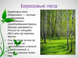 Березовые леса Берёзовые леса (березняки) — чистые и смешанные насаждения с п