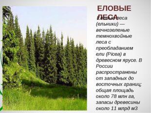 ЕЛОВЫЕ ЛЕСА Еловые леса (ельники) — вечнозеленые темнохвойные леса с преоблад