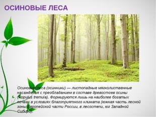 ОСИНОВЫЕ ЛЕСА Осиновые леса (осинники) — листопадные мягколиственные насажден