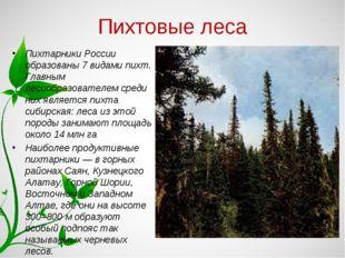 Пихтовые леса Пихтарники России образованы 7 видами пихт. Главным лесообразов