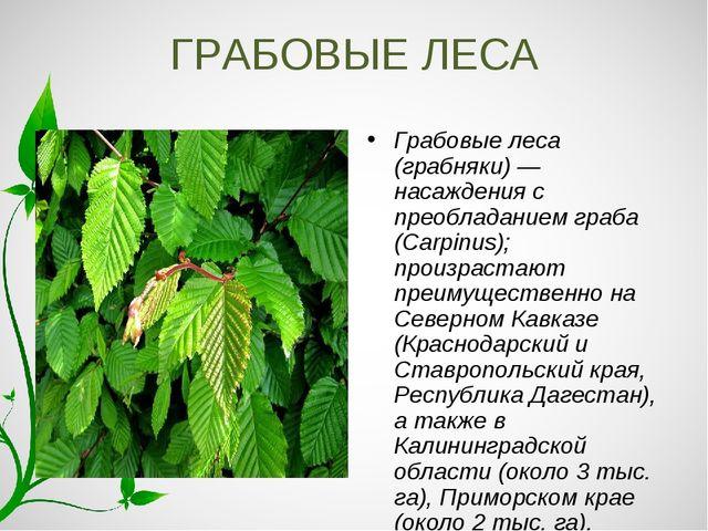 ГРАБОВЫЕ ЛЕСА Грабовые леса (грабняки) — насаждения с преобладанием граба (Ca...