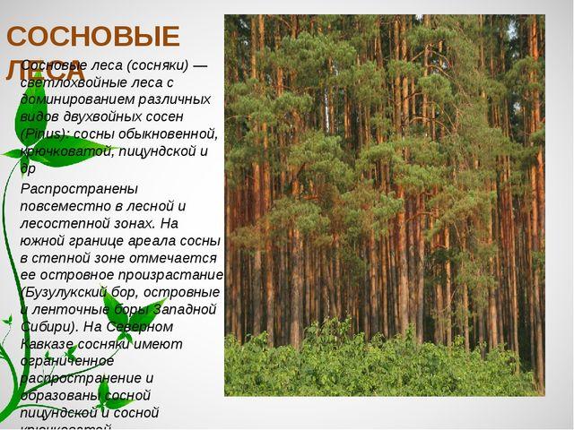 СОСНОВЫЕ ЛЕСА Сосновые леса (сосняки) — светлохвойные леса с доминированием р...