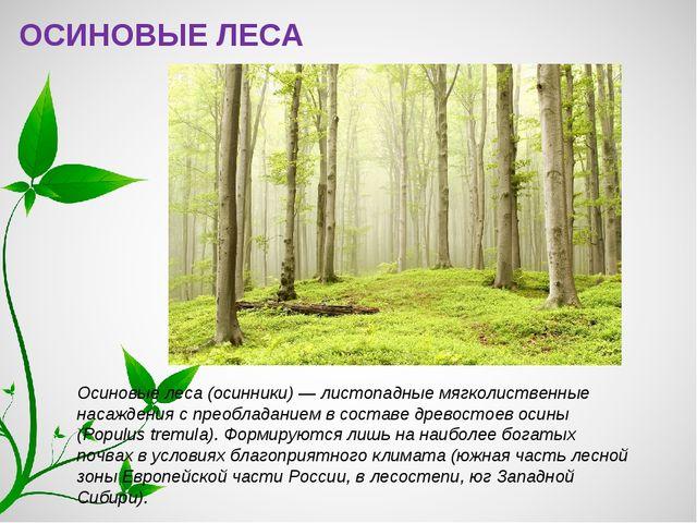 ОСИНОВЫЕ ЛЕСА Осиновые леса (осинники) — листопадные мягколиственные насажден...