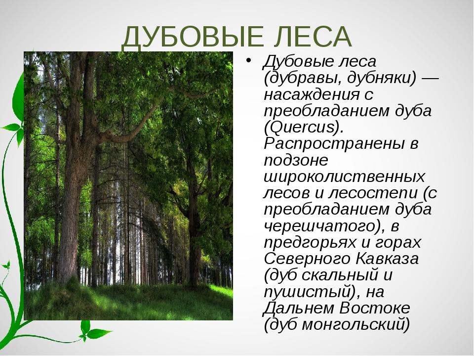 ДУБОВЫЕ ЛЕСА Дубовые леса (дубравы, дубняки) — насаждения с преобладанием дуб...