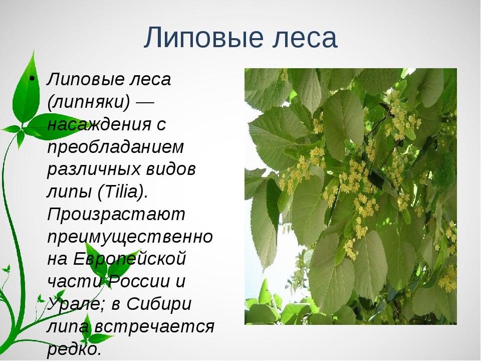 Липовые леса Липовые леса (липняки) — насаждения с преобладанием различных ви...