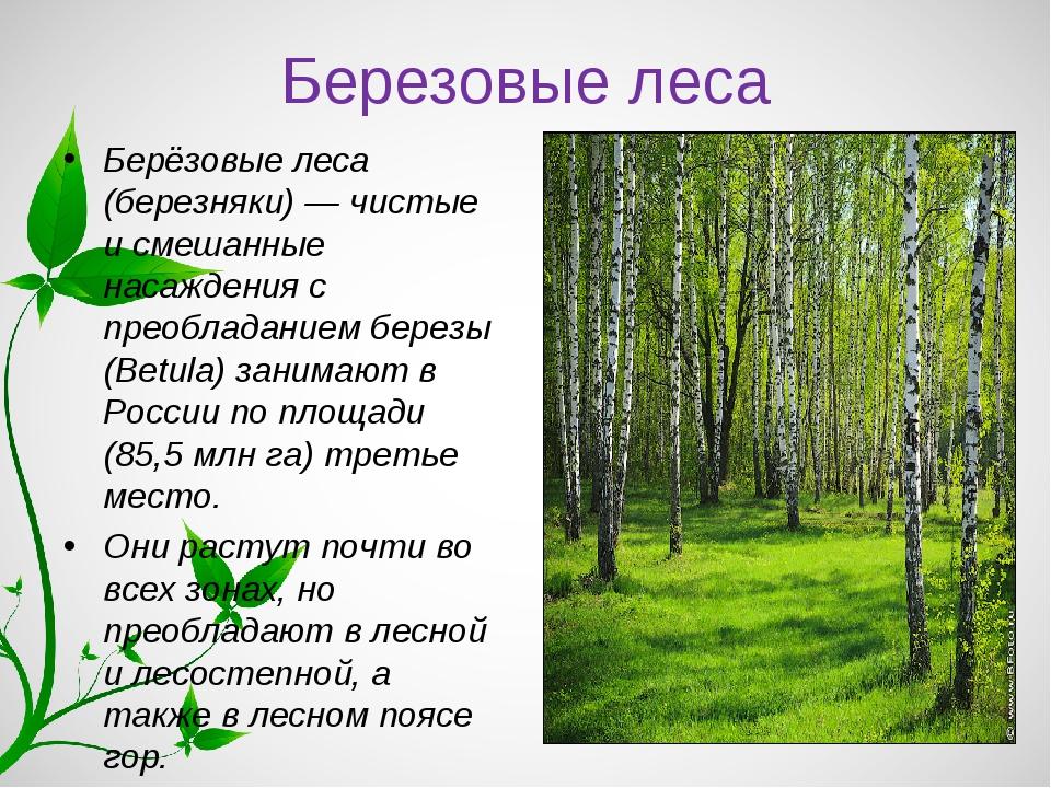 Березовые леса Берёзовые леса (березняки) — чистые и смешанные насаждения с п...
