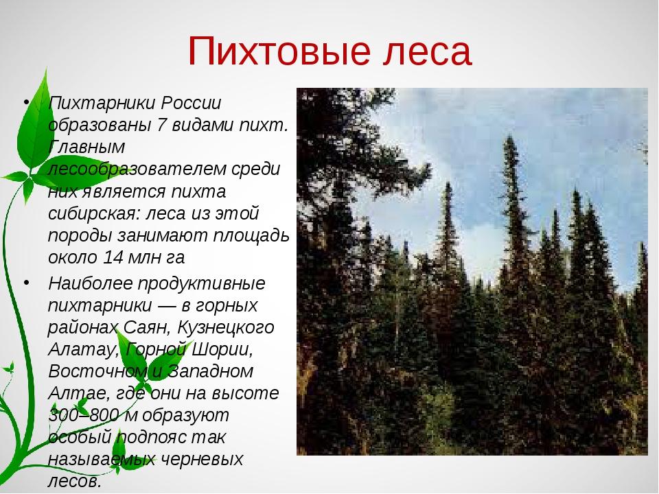 Пихтовые леса Пихтарники России образованы 7 видами пихт. Главным лесообразов...