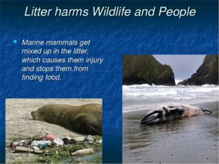 Litter harms Wildlife and People Marine mammals get mixed up in the litter, w