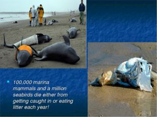 100,000 marina mammals and a million seabirds die either from getting caught