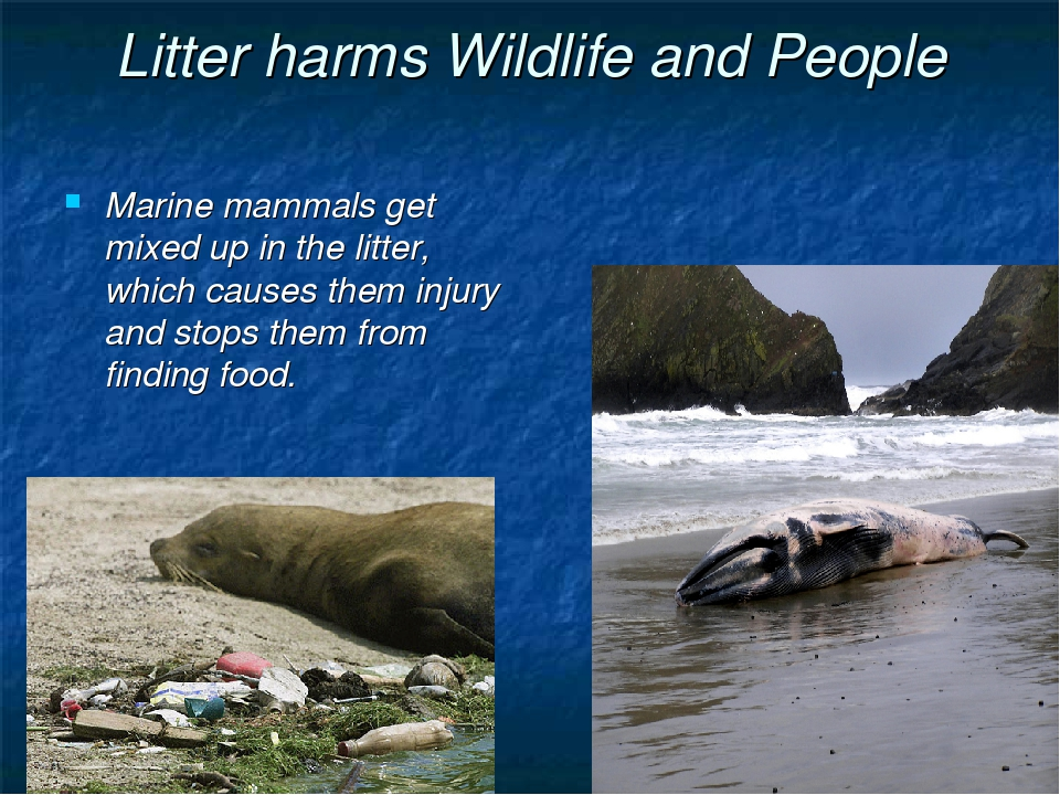 Litter harms Wildlife and People Marine mammals get mixed up in the litter, w...