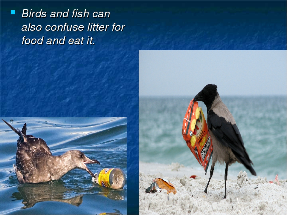 Birds and fish can also confuse litter for food and eat it.