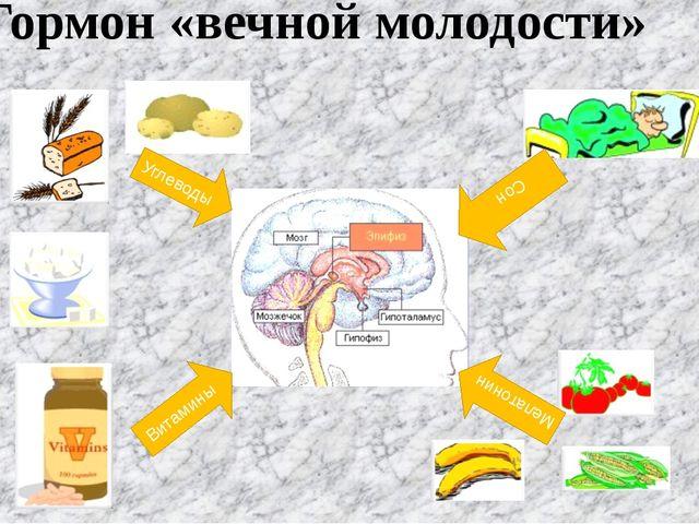 Гормон «вечной молодости» Витамины Углеводы Мелатонин Сон