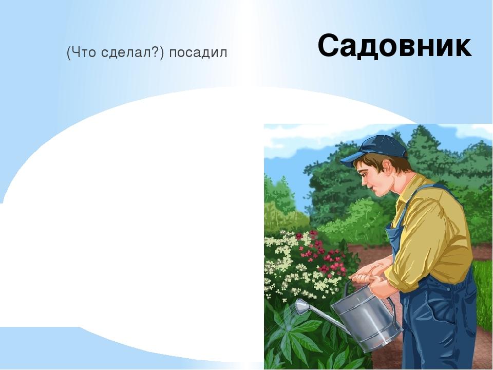 Садовник (Что сделал?) посадил