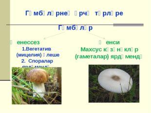 Гөмбәләрнең үрчү төрләре Гөмбәләр Җенессез Вегетатив (мицелия) өлеше 2. Спора