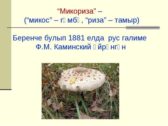 """Микориза"" – (""микос"" – гөмбә, ""риза"" – тамыр) Беренче булып 1881 елда рус га..."