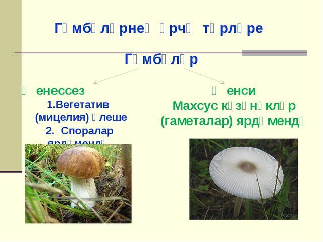 Гөмбәләрнең үрчү төрләре Гөмбәләр Җенессез Вегетатив (мицелия) өлеше 2. Спора...
