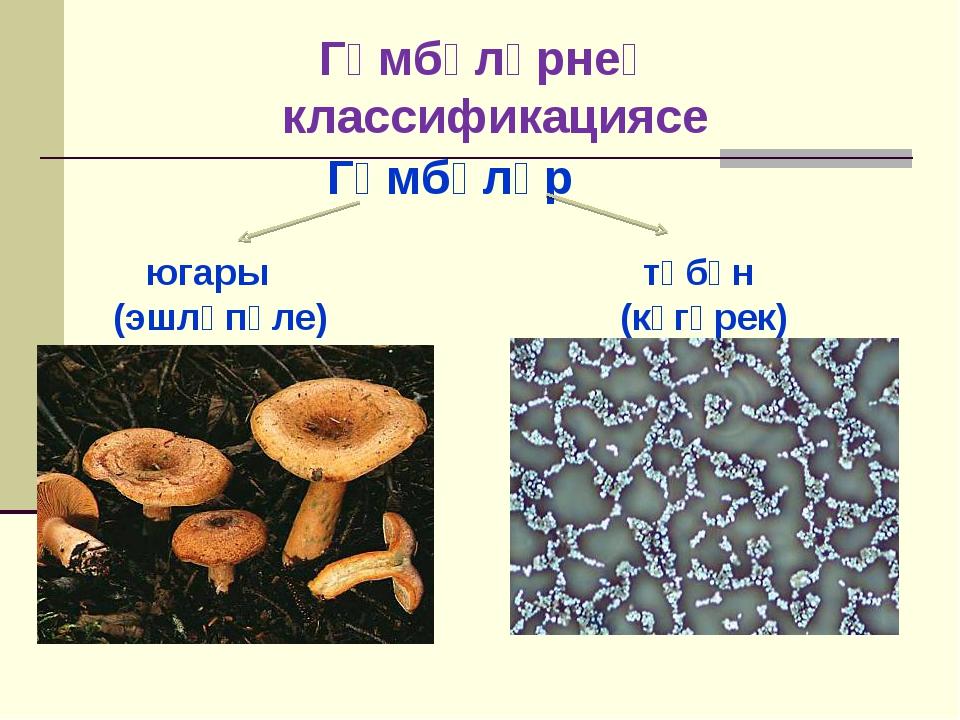 Гөмбәләр югары түбән (эшләпәле) (күгәрек) Гөмбәләрнең классификациясе