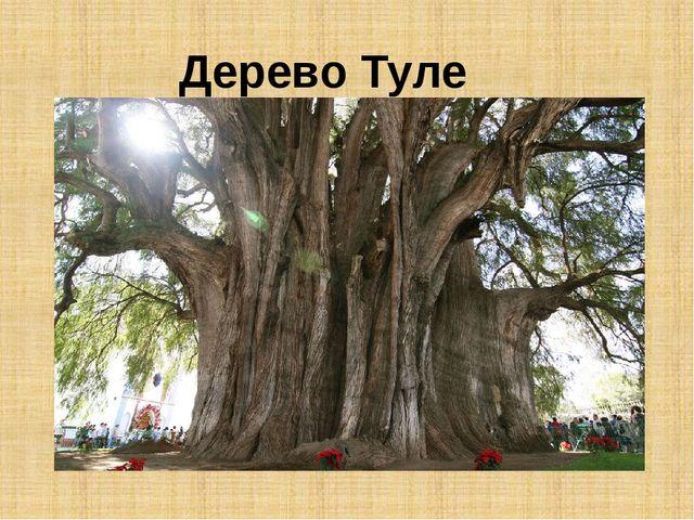 Дерево Туле