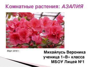 Комнатные растения: АЗАЛИЯ Михайлусь Вероника ученица 1«В» класса МБОУ Лицей