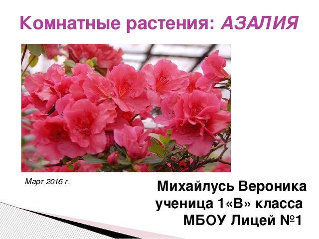 Комнатные растения: АЗАЛИЯ Михайлусь Вероника ученица 1«В» класса МБОУ Лицей...