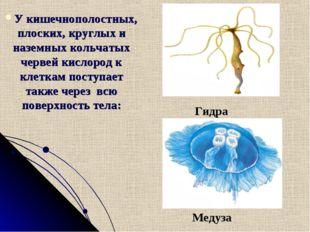 Медуза У кишечнополостных, плоских, круглых и наземных кольчатых червей кисло