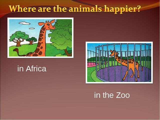 in Africa in the Zoo