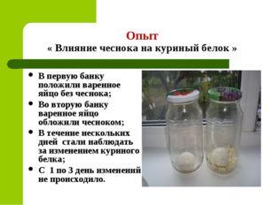 Опыт « Влияние чеснока на куриный белок » В первую банку положили варенное яй