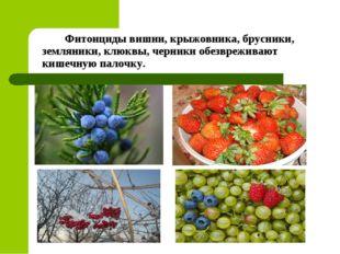 Фитонциды вишни, крыжовника, брусники, земляники, клюквы, черники обезврежив