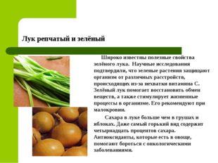Лук репчатый и зелёный Широко известны полезные свойства зелёного лука. Научн