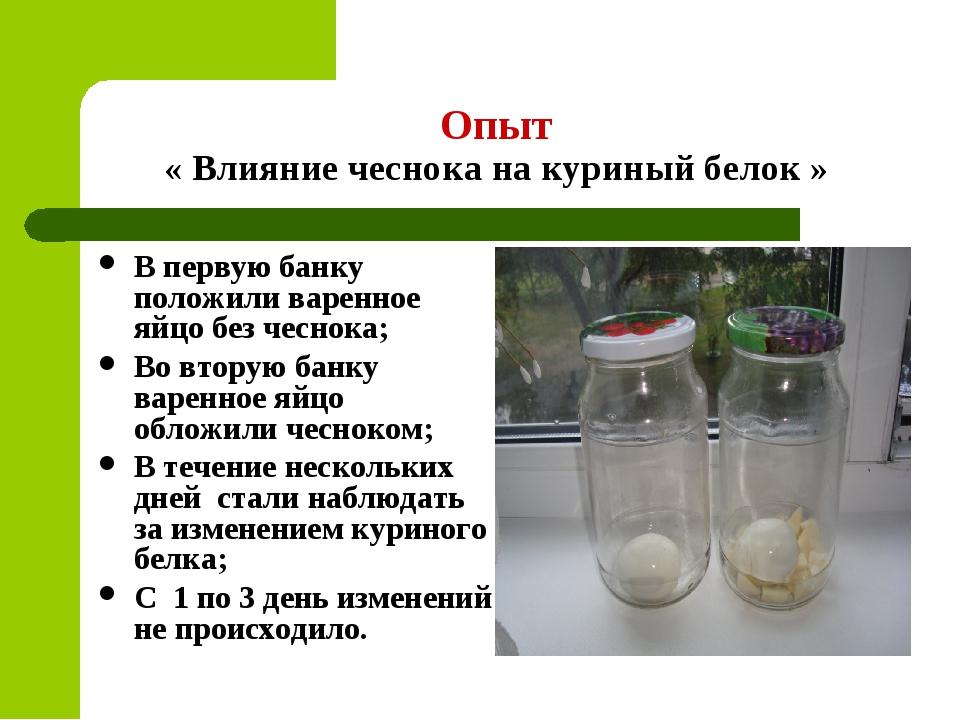 Опыт « Влияние чеснока на куриный белок » В первую банку положили варенное яй...