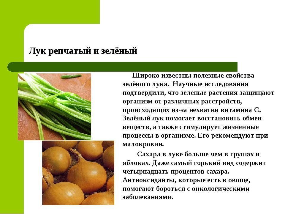Лук репчатый и зелёный Широко известны полезные свойства зелёного лука. Научн...