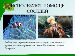 ИСПОЛЬЗУЮТ ПОМОЩЬ СОСЕДЕЙ Рыба-клоун и рак- отшельник используют для защиты о