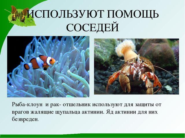ИСПОЛЬЗУЮТ ПОМОЩЬ СОСЕДЕЙ Рыба-клоун и рак- отшельник используют для защиты о...