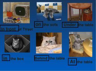 in the box on the sofa Under the table In front of TVset Behind the table At