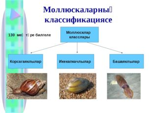 Моллюскаларның классификациясе 130 мең төре билгеле Моллюсклар класслары Кор