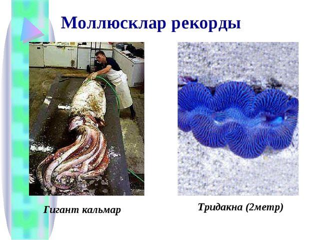 Моллюсклар рекорды Гигант кальмар Тридакна (2метр)