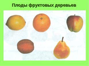 Плоды фруктовых деревьев