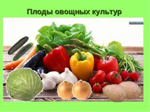 Плоды овощных культур
