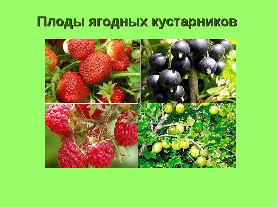 Плоды ягодных кустарников