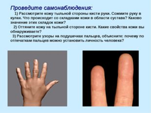 Проведите самонаблюдения: 1) Рассмотрите кожу тыльной стороны кисти руки. Сож