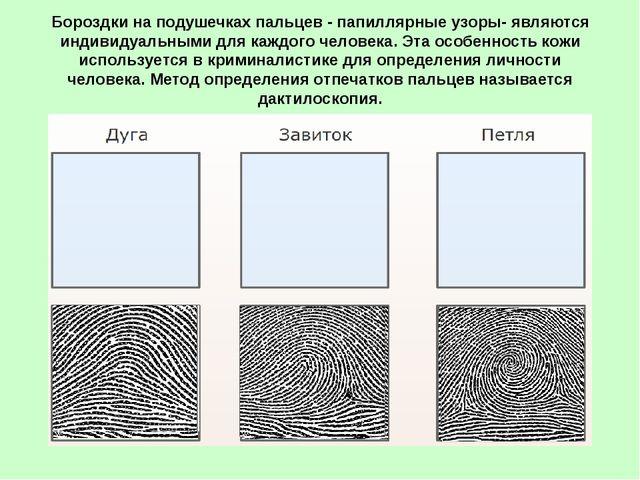 Бороздки на подушечках пальцев - папиллярные узоры- являются индивидуальными...